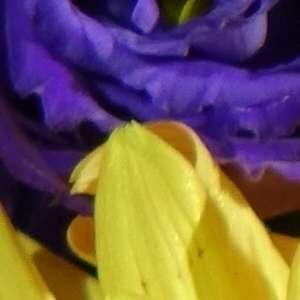 Обзор фото камеры Sony DSC-RX10 - №9