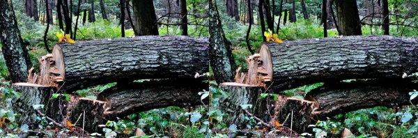 Стерео сделано Nikon D90 105тым объективом ,Штатив и Velbon V4 Articulating Boom Arm