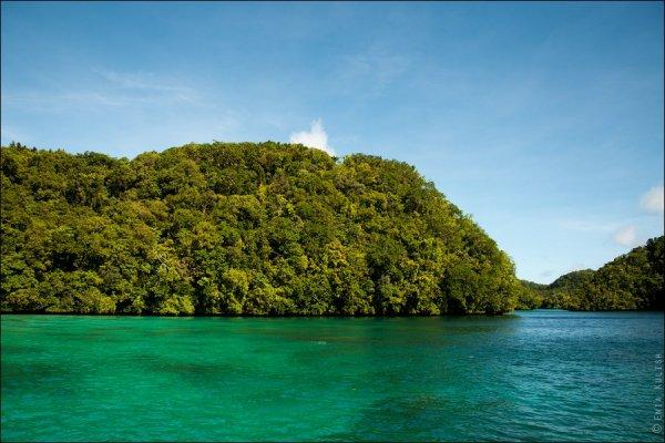 Красивые фото озера медуз - №2