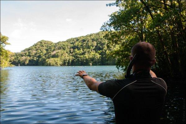 Красивые фото озера медуз - №14