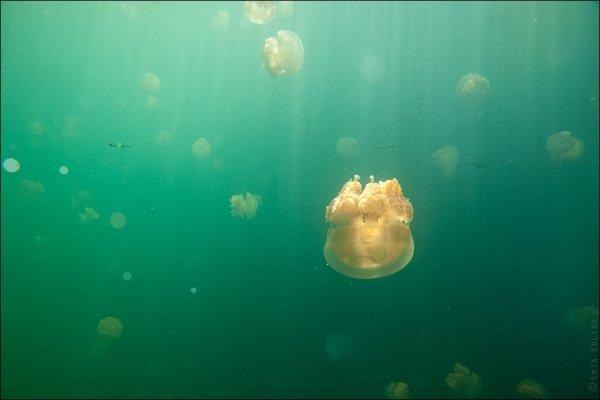 Красивые фото озера медуз - №18
