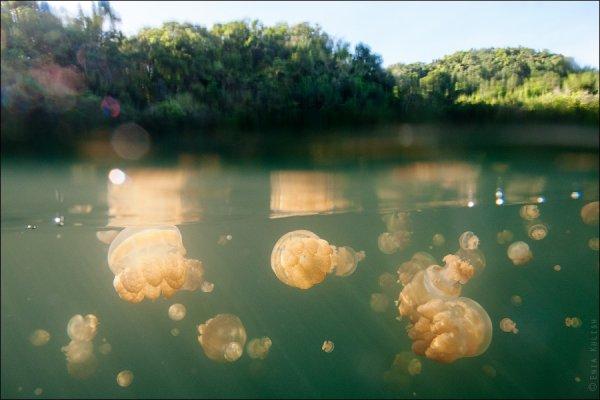 Красивые фото озера медуз - №34