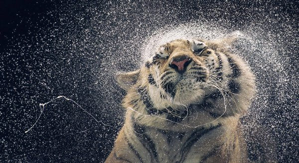 Самые интересные фото из мира науки за 2013 год - №7