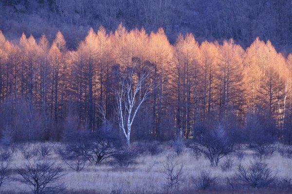 Урок фотографии. Поиск сюжетов для съемки зимой - №9