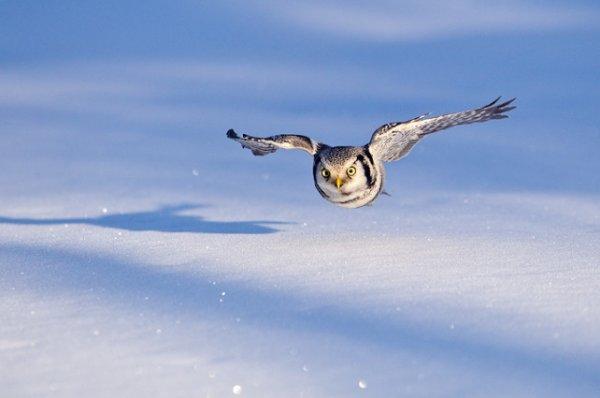 Урок фотографии. Поиск сюжетов для съемки зимой - №13