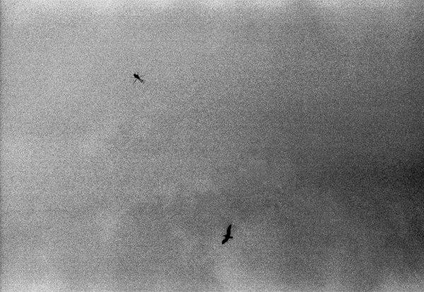 """Черно-белые фото Алины Тарабариновой: """"Фотография - это диалог"""" - №6"""