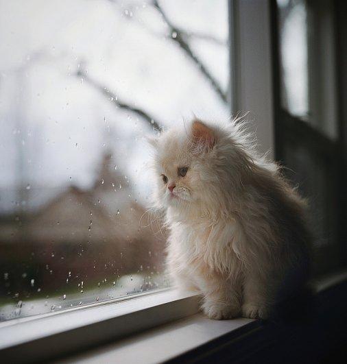 Кошки в восхитительных и милых фото - №2