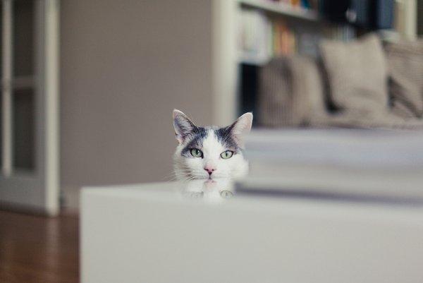 Кошки в восхитительных и милых фото - №6