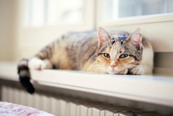 Кошки в восхитительных и милых фото - №10
