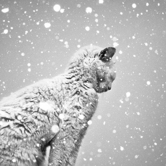 Кошки в восхитительных и милых фото - №14