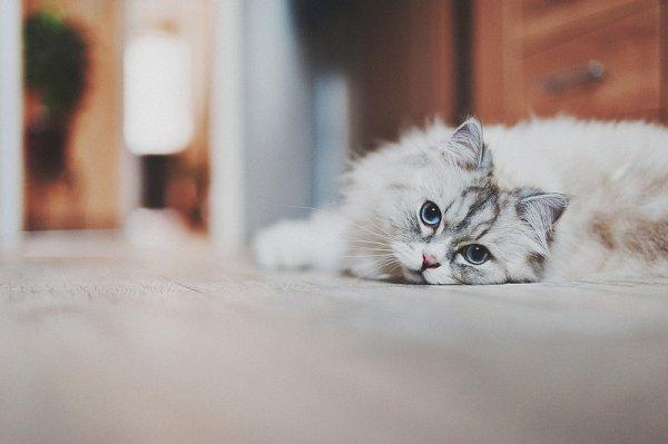 Кошки в восхитительных и милых фото - №18