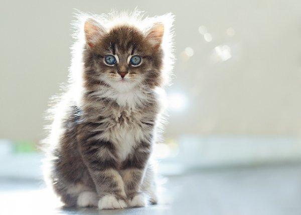 Кошки в восхитительных и милых фото - №22