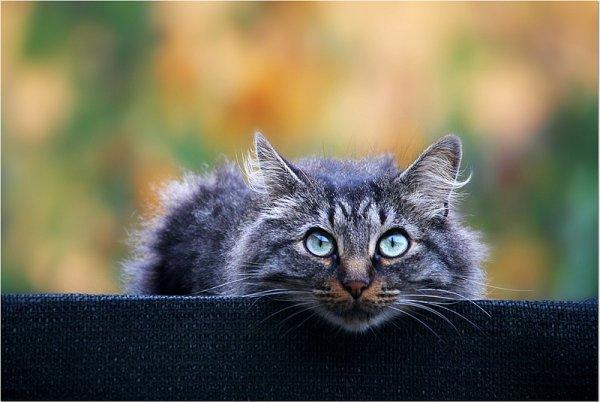 Кошки в восхитительных и милых фото - №30