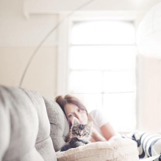 Кошки в восхитительных и милых фото - №34