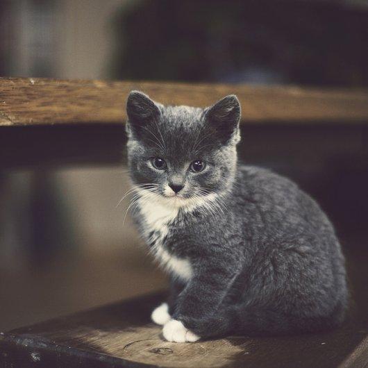 Кошки в восхитительных и милых фото - №38