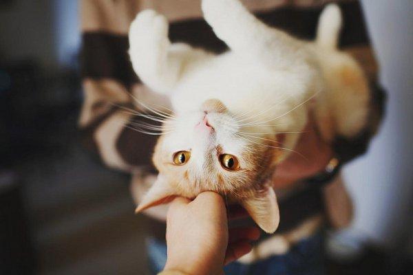 Кошки в восхитительных и милых фото - №50