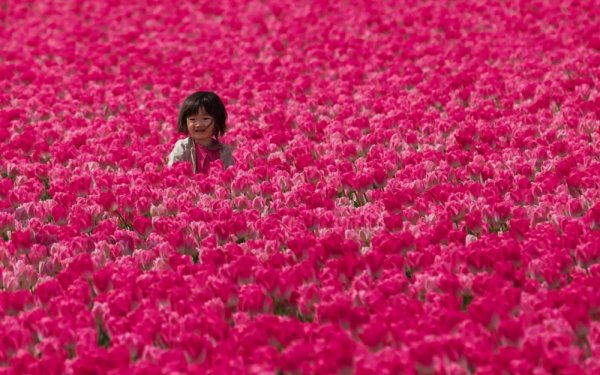 Удачные кадры - Девочка в тюльпановых полях, Голландия. Flickr