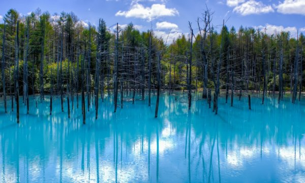 самые удачные кадры - Голубой пруд, Хоккайдо, Япония. © Miki Asai