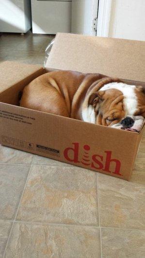 спящая собака фото