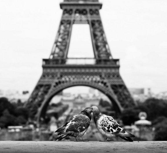 животный мир фото