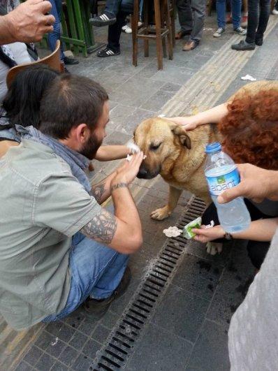 добрые поступки людей