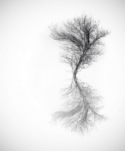 симметрия в природе фото