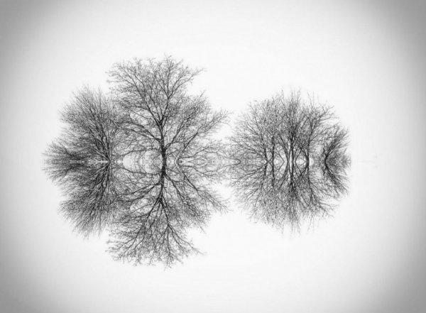 симметрия в искусстве фото