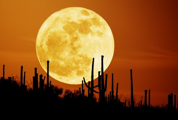 красивые фотографии Луны