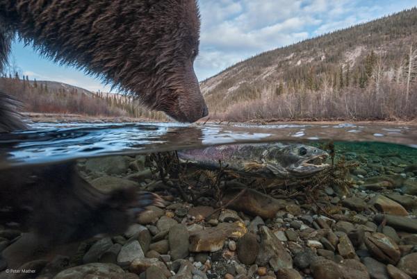 Дикая природа © Peter Mather