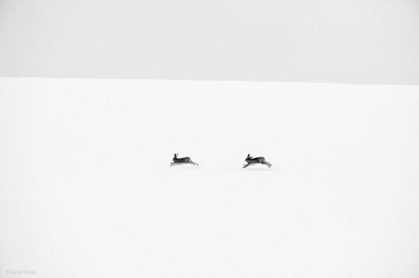 смотреть дикая природа © David Tipling