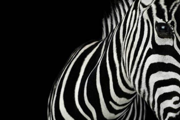 дикий животный мир