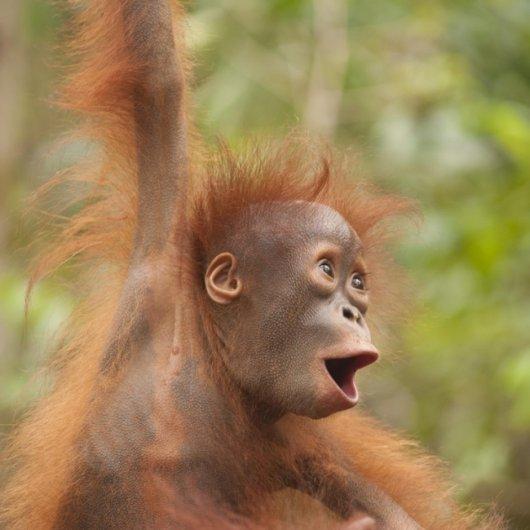 эмоции радости животных