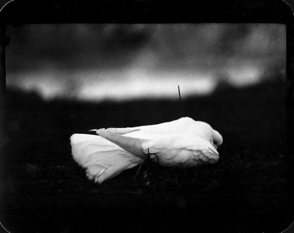 Черно-белое фото