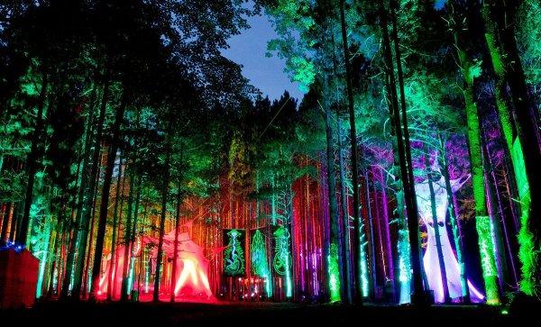 фестивали мира 2014