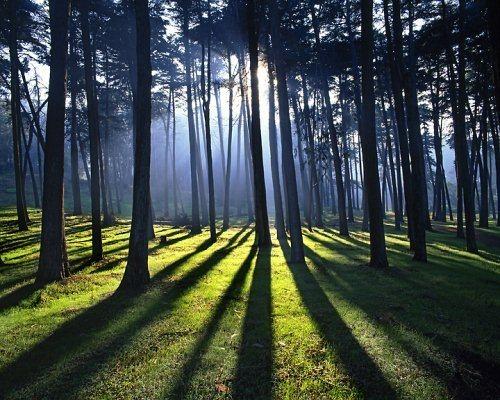 Тень и свет
