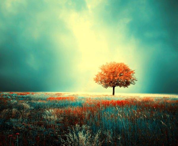 Яркие фото