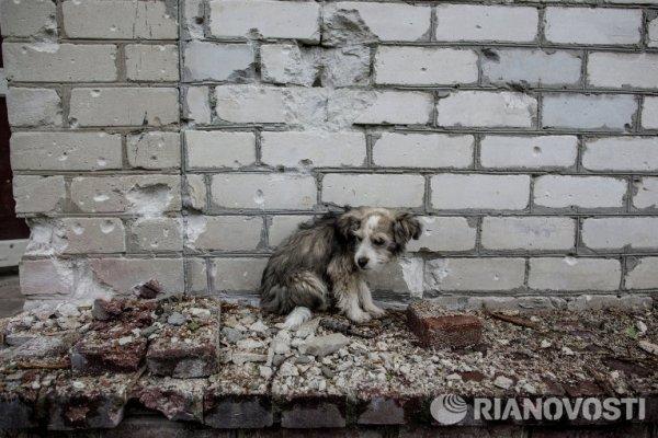 Памяти фотокорреспондента Андрея Стенина... - №25