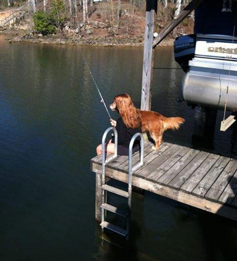 Удачные фото хозяина с собаками 3