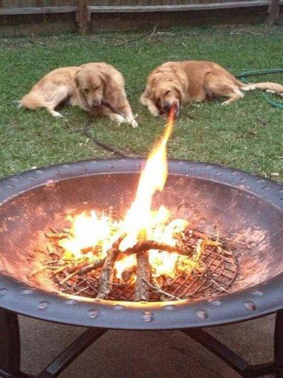 Удачные фото хозяина с собаками 7