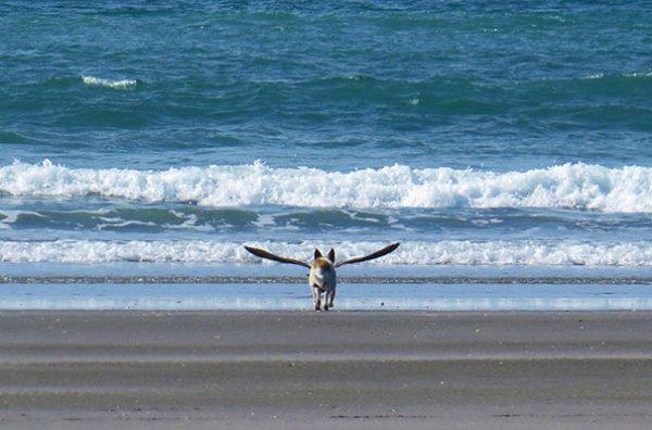 Удачные фото хозяина с собаками 11