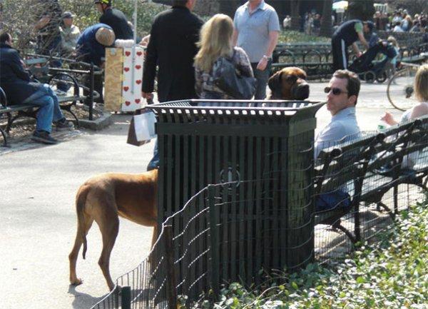 Удачные фото хозяина с собаками 27