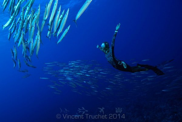 Подводные фото