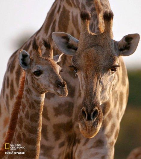 ..Живая природа Ботсваны.