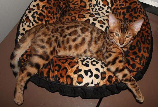 домашние любимцы кошки