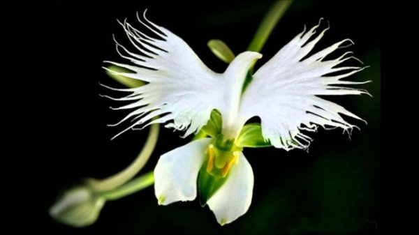 картинки чудеса природы