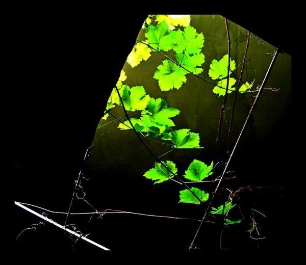 Зеленое на черном