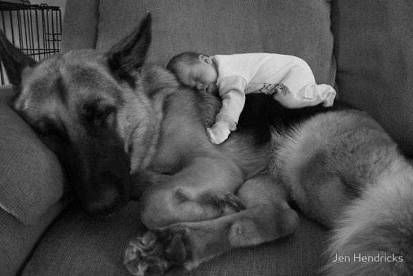 Лучшая собака для ребенка 1