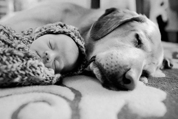 Лучшая собака для ребенка 9