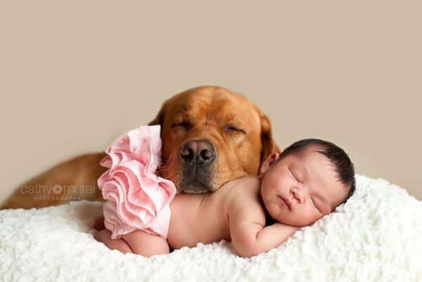 Лучшая собака для ребенка 17