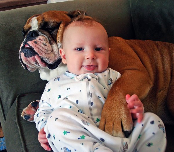 Лучшая собака для ребенка 25